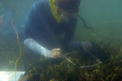 Seagrass sampling